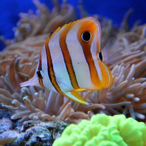 Mořská akvaristika